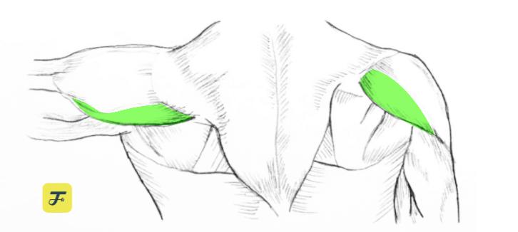 肩膀肌群 三角肌後束